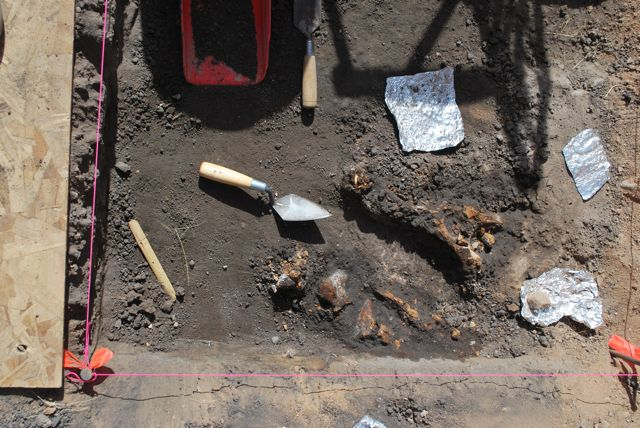Bones from archeological site Blackwater Draw in New Mexico. Image: https://theclovissite.wordpress.com/2013/06/03/an-excursion-to-water-canyon/