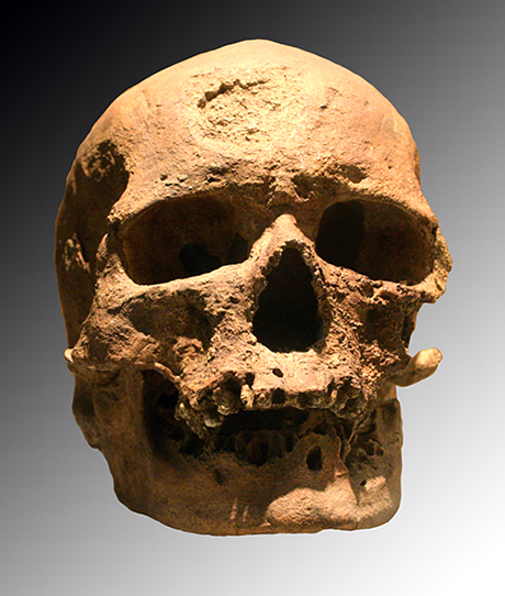 Cro Magnon skull. Currently located in Musée de l'Homme, Paris