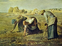 Example of medieval farming