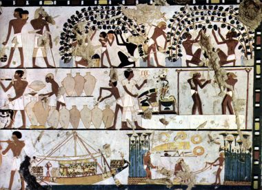 Grape cultivation in Ancient Egypt.