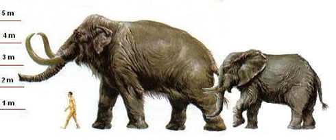 Size comparison between Mammoth (Ice age),  man and today's elephants.