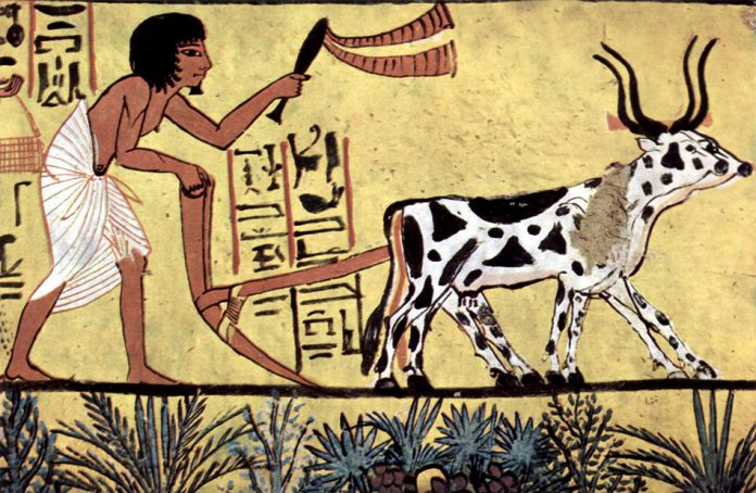 Ploughing with a yoke of horned cattle in Ancient Egypt from the burial chamber of pharaoh Sennedjem
