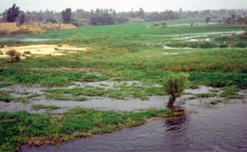 Nile River flooding example