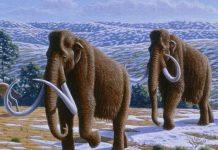 Flora and fauna in Quaternary period